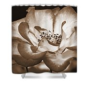 Sepia Tones Shower Curtain