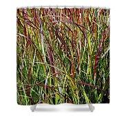 September Grasses By Jrr Shower Curtain