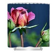September Rose Shower Curtain