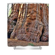 Sequoia Tree Base Shower Curtain