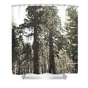 Sequoias Shower Curtain