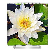 Serenity In White - Water Lily Shower Curtain