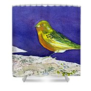Serinus  Canaria  Aka The Canary Shower Curtain