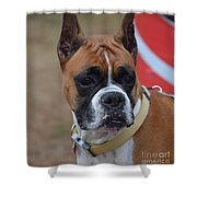 Serious Boxer  Shower Curtain