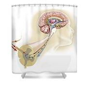 Serotonin Released In The Brain Travels Shower Curtain