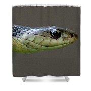 Serpent Profile Shower Curtain