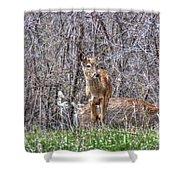 Sertoma Park Deer Shower Curtain