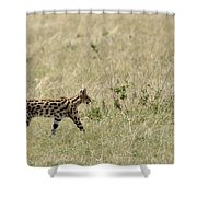 Serval Hunting Shower Curtain