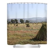 Sesame Crop And Harvest Shower Curtain