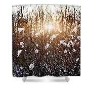 Setting Sun In Winter Forest Shower Curtain