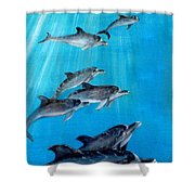 Seven Dolphins Shower Curtain