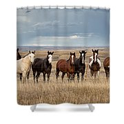 Seven Horses On The Range Shower Curtain
