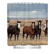 Seven Horses On The Range Pan Shower Curtain
