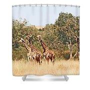 Seven Masai Giraffes Shower Curtain