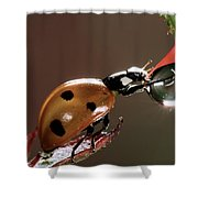 Seven-spotted Ladybird Coccinella Shower Curtain