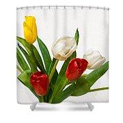 Seven Tulips - Four Colors Shower Curtain