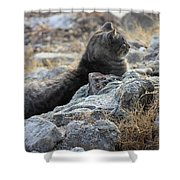 Sexy Cat Shower Curtain