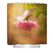 Shabby Chic Rose Print Shower Curtain