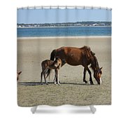 Shackleford Banks Foal Shower Curtain