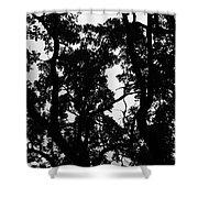 Shade Shower Curtain
