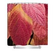 Shades Of Autumn Shower Curtain