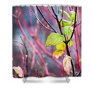 Shades Of Autumn - Reds And Greens Shower Curtain