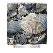 Shades Of Blue Shells Shower Curtain