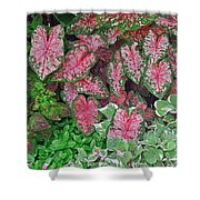 Shades Of Pink And Green And A Hint Of Purple Shower Curtain