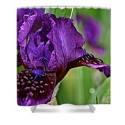 Shades Of Purple Shower Curtain