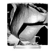 Shades Of Rose Shower Curtain