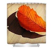 Shadow Cast By Leaf Shower Curtain