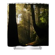 Shadow Dreams Shower Curtain