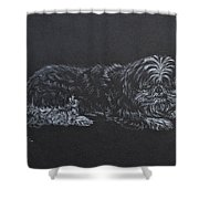 Shadow Shower Curtain by Michele Myers