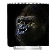 Shadow Series Two Shower Curtain