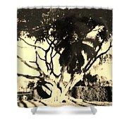 Shadow Tree Shower Curtain