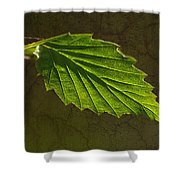 Shadows And Light Of The Leaf Shower Curtain