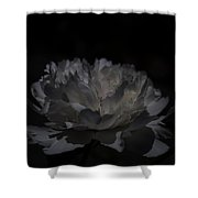 Shadows Of Light Shower Curtain