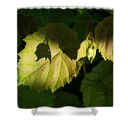 Shadows Of New Life Shower Curtain