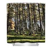 Shadows Of The Larch Forest Sunset No2 Shower Curtain