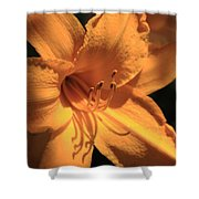 Day Lily Shadows Shower Curtain
