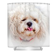 Shaggy Dog Shower Curtain