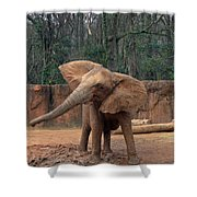 Shake It Up Baby Now Shower Curtain