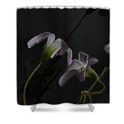 Shamrock Trinity Shower Curtain