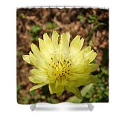 Shared Beauty Shower Curtain