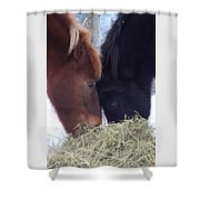 Best Buddies Sharing A Delicious Meal Shower Curtain