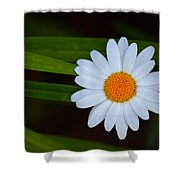 Sharing The Space Shower Curtain