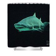 Shark-09441 Shower Curtain