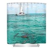 Shark N Sail I Shower Curtain