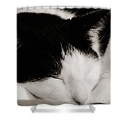 Sharp And Sweet Shower Curtain