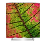 Shed Foliage Shower Curtain